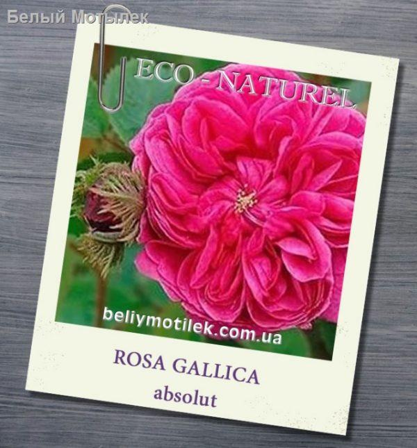 розы абсолю